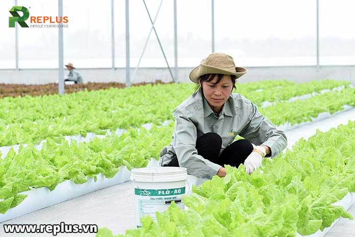 Liên-kết-trong-sản-xuất-nông-nghiệp-được-hỗ-trợ-đến-10-t